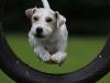 Hundesportfotoseminar